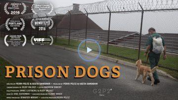 Prison-Dogs.jpg